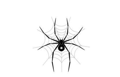 """网站常见的""""蜘蛛陷阱""""有哪些?"""